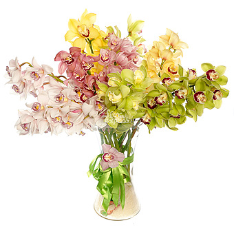 Букет Орхидеи: Орхидеи