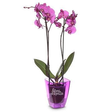 Букет Орхидея «Нежность»